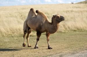 камила 3