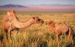 камила5